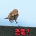 すずめは恐竜だった!スズメや鳥とプテラノドンの違い!恐竜の子孫は鳥類で翼竜は!?